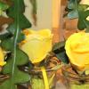 Ferran Florista Flower Shop