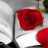A rose for love and a book forever