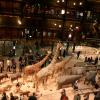 Des musées incontournables à Paris