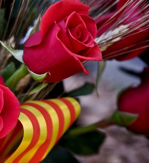 Sant Jordi's red rose
