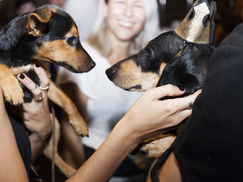 Pets' Party Urban