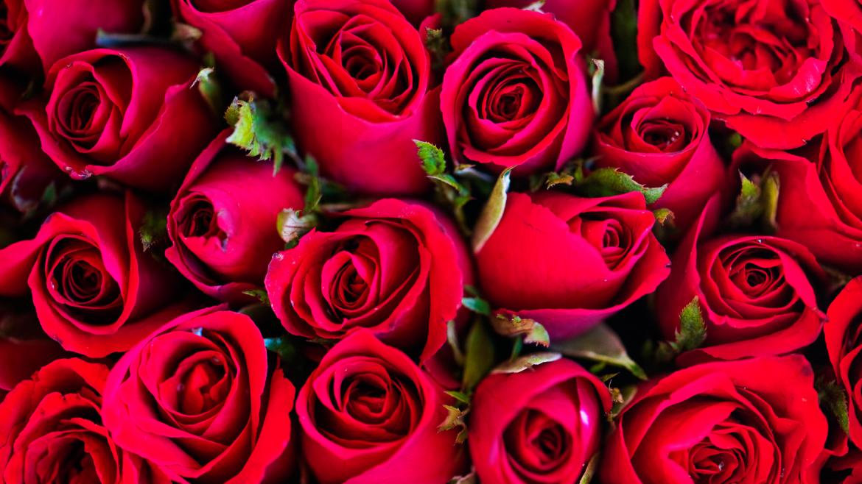 Sant Jordi Barcelona Derby Hotels Collection Roses