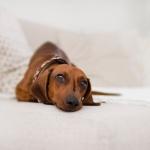 pet friendly derby hotels collection dog friendly barcelona london paris madrid voyages hôtels