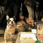 Portada Pets Party Trixie