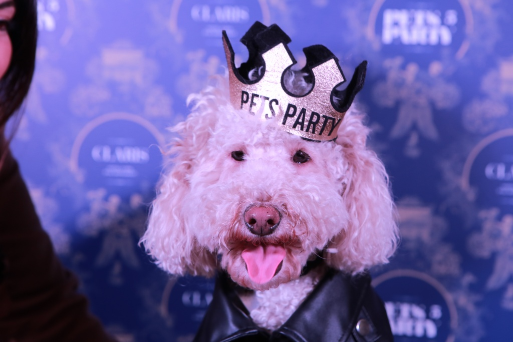 Pets Party Hotel Claris Barcelona Pet friendly