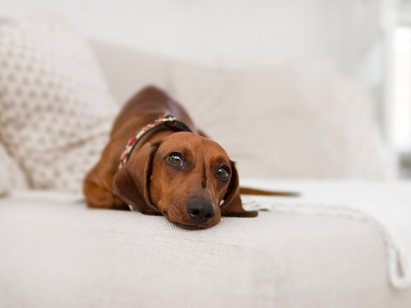 pet friendly derby hotels collection dog friendly barcelona london paris madrid voyages hôtels