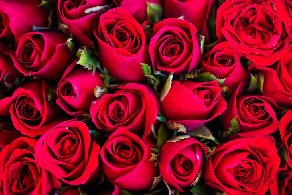 Sant Jordi Barcelona Derby Hotels Collection Dia del Libro Rosas